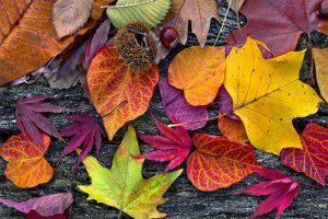 11-13_Gwaltney_Supply_Company-November_Seasonal_Foods-300x200-1