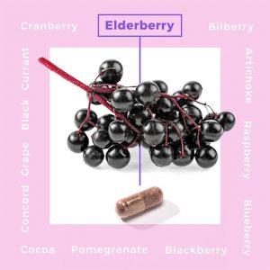 Gwaltney_Helathy_Living_elderberry-300x300